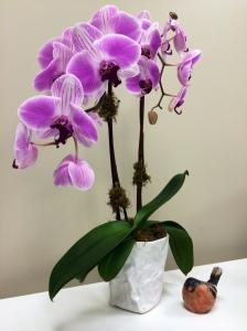 Orchid & Bird